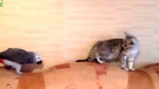 Приколы с кошками. Наглый попугай и кошка