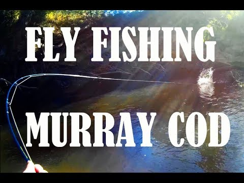 Fly fishing for Murray cod lessons hard learned