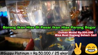 shopping for all Ornamental Fish in the Ornamental Fish Market in Parung Bogor