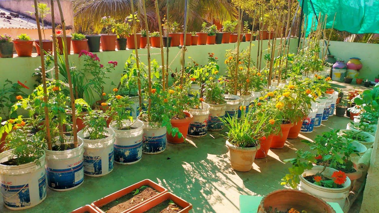 My terrace garden   November 9   Garden tour   How to grow organic  vegetables on terrace   Indian