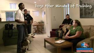 Lorenzo's Dog Training Team In Home Evaluation