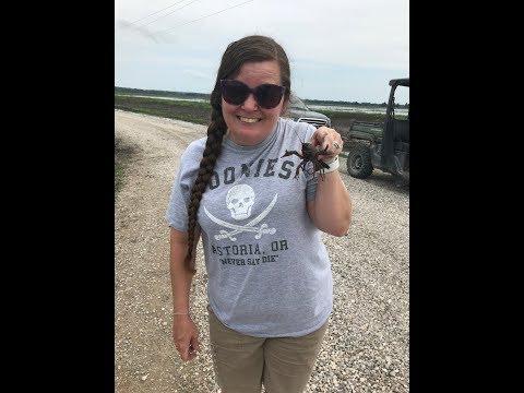Crawfish Invasion - Crawfish Hunting By Hand In Missouri