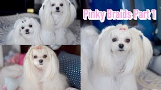 STYLING: Pigtail Maltese Braided Hair Dog UPDO Korean Cover {BACK Infinite} (I NEED YOU BTS )말티즈
