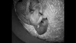 Wildpark Waldhaus Mehlmeisel - Webcam