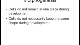 Lecture 1 Differentiation and Morphogenesis