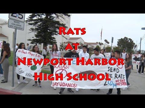 Rats at Newport Harbor High School