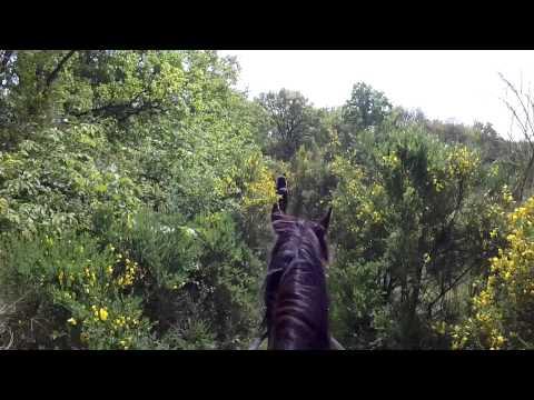 #15 - Balade à cheval à Rambouillet - GoPro 3+