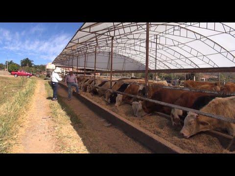 Download P110 El rancho de la familia Angulo, todo el ciclo.