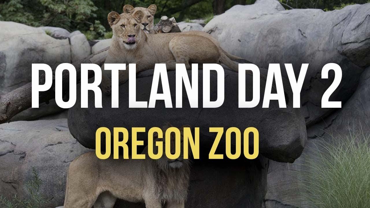 video portland zoo - 1280×720