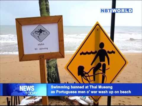 Swimming banned at Thai Mueang as Portuguese men o' war wash up on beach