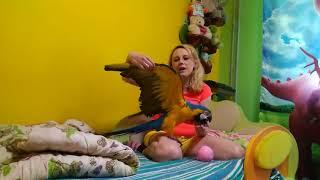 Обрезание крыльев попугаю