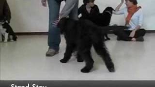 Puppy Training - Sirius Berkeley Puppy 1 (5.1)