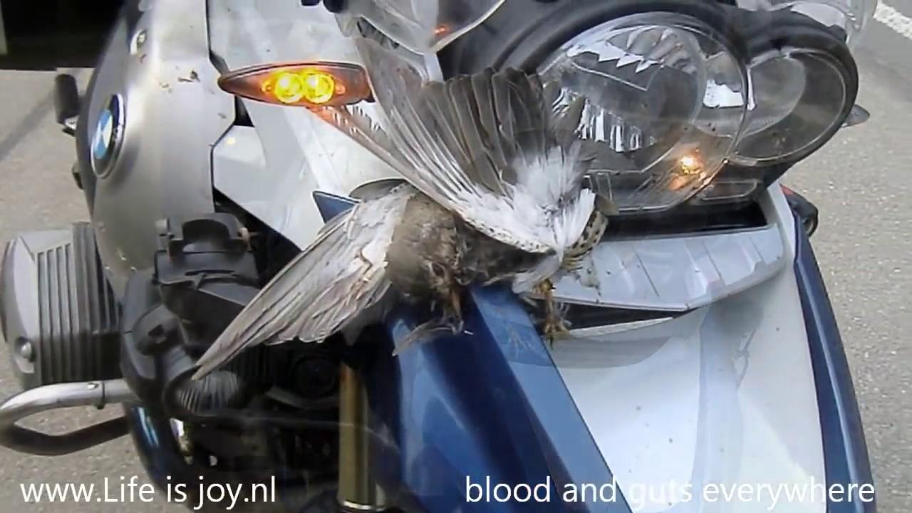 Bird Crash Into Bmw R1200gs Motorbike Moto Motorcycle