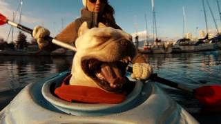 Dexter likes to kayak - Funny dogs