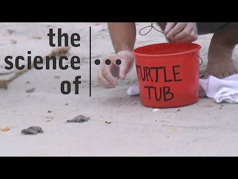 Sea Turtles... Threats and Solutions