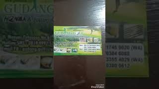 Gudang Golf Surabaya Specialist Honma Golf Japan Direct