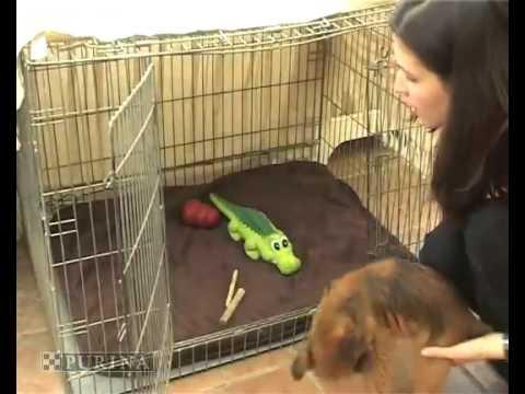 So wird Ihr Hund stubenrein