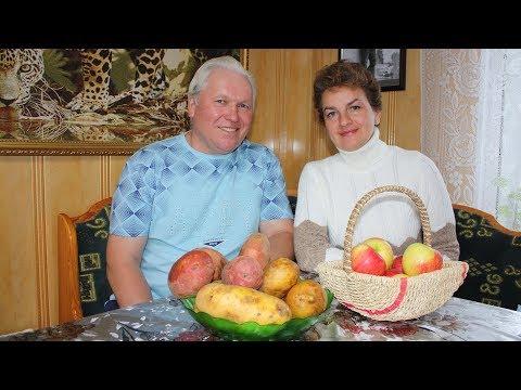 Самый вкусный картофель  Выбираем новые сорта | синеглазка | картофеля | картофель | жуковский | петренко | белароза | садовый | наталья | вкусный | алладин