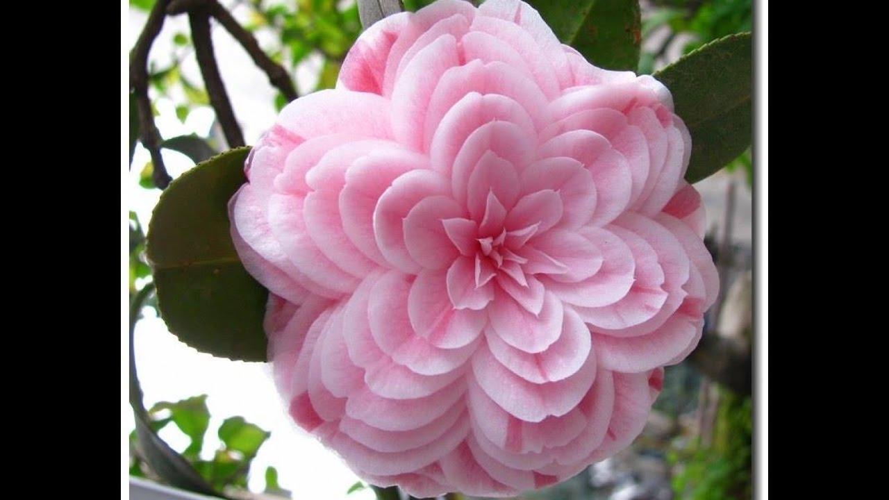 fiori immagini e frasi youtube