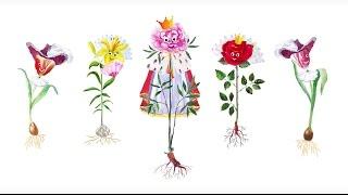 23. Цветковые травы. Часть 1(Травянистые цветковые растения такие разные! У кого-то только один крупный и яркий цветок, а у кого-то много-..., 2016-08-22T10:04:42.000Z)