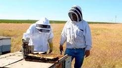 WaGrown Bees S3E10: Olson's Honey