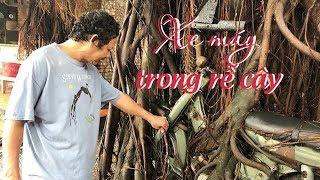 Chiếc xe máy bị rễ si cây quấn suốt 25 năm ở Bình Dương
