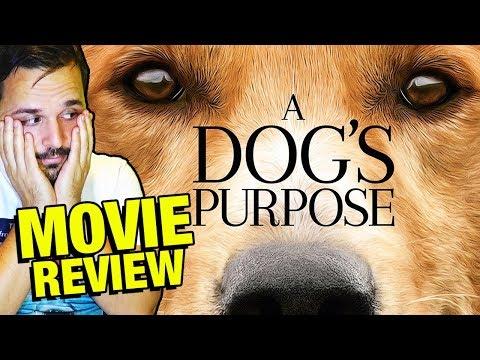Tu mejor amigo - CRÍTICA - REVIEW - OPINIÓN - La razón de estar contigo - A Dog's Purpose