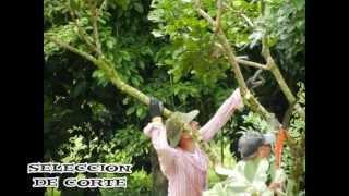 Rambutan Poda  2012