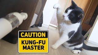 Don't take away my hair! Cat vs Vacuum cleaner