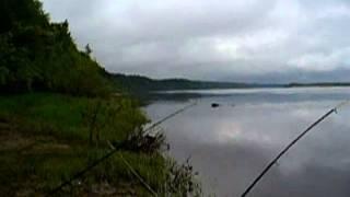 Приколи на риболовлі.Ведмідь перепливає річку.