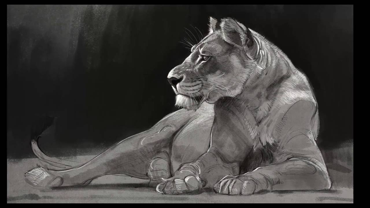 Speed Paint Lioness Drawing Youtube