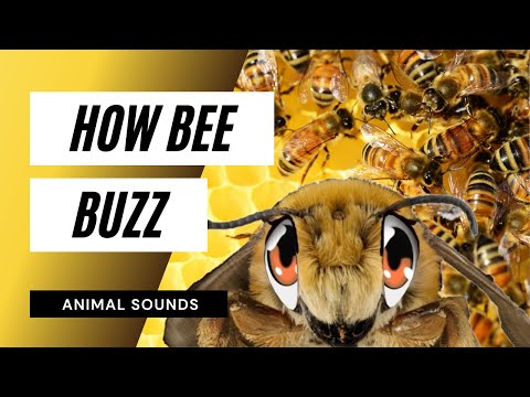 The Animal Sounds: Bee Buzz - Sound Effect - Animation