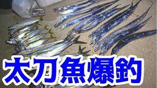 堤防からルアーで太刀魚が大爆釣!!