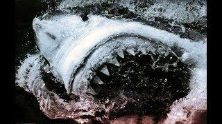 🎡 Топ-10 Фильмов Про Акул (Top 10 Shark Movies)