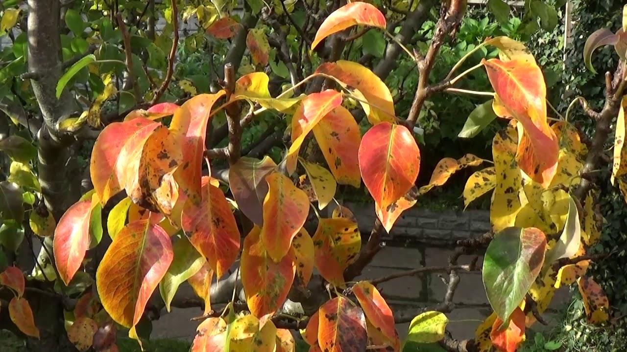 Changing Seasons In An English Country Garden - YouTube