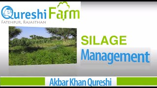 Save Feed or Fodder Cost at Goat Farm | Silage Making by Qureshi Farm