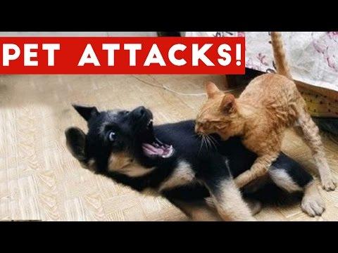 Funniest Animal Attacks Compilation October 2016 | Funny Pet Videos