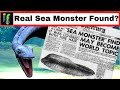 Sea Serpent Found 'IF' The recently found remains are a real sea monster.