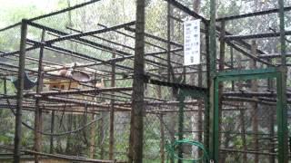 cri des singes gibbons primate rescue center cuc phuong national park vietnam