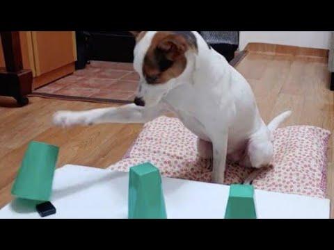 10-smartest-dog-breeds-😍