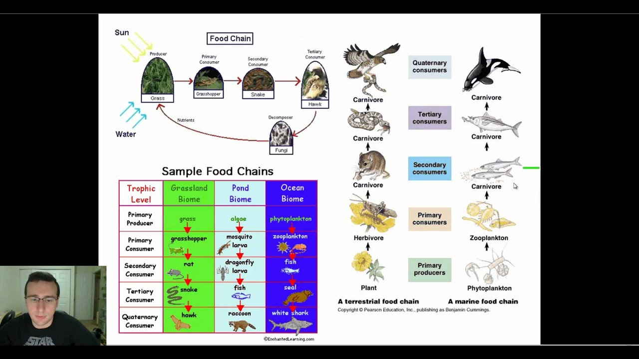 how to create a food web diagram rack and pinion ecological diagrams chains webs pyramids youtube