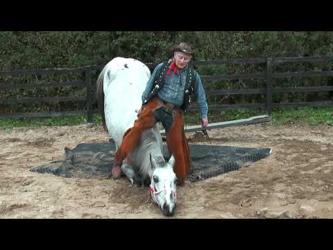 Texas Ollie training his trick horses