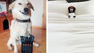 Если Вы Завели Собаку, Скучать Не Придётся