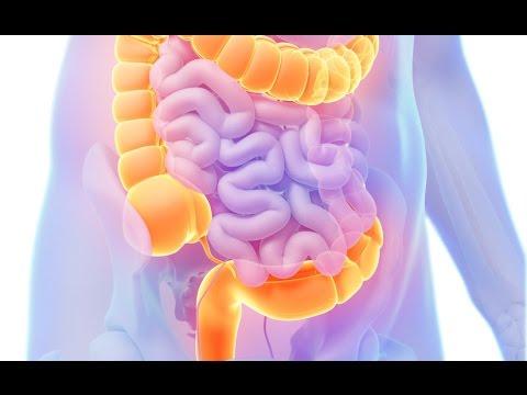 Khái niệm, chức năng và các bệnh lý về đại tràng - Clip 01