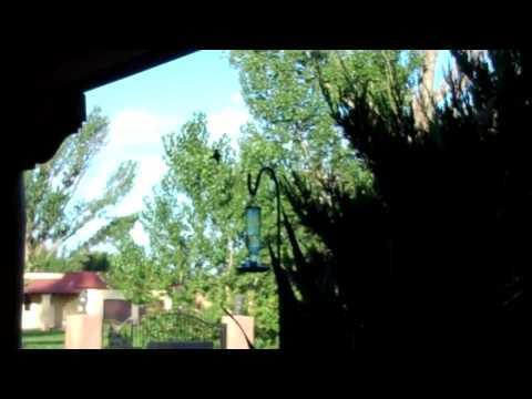Birds Bernalillo New Mexico