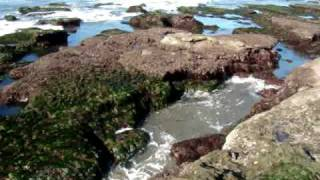 Ocean Beach - A look at the Tidal Pools #4