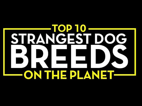 Top 10 Strangest Dogs Breeds You Must Have in 2017