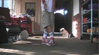 [Cwalk]Wiggle Walk Shuffle Tutorial