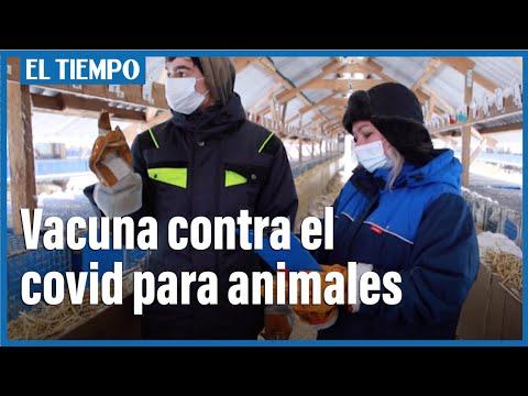 Rusia lanza la primera vacuna contra el coronavirus para animales