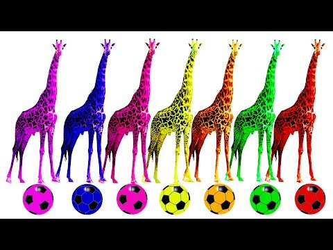 Learn Colorful Wild Animals Colors For Children | Playing Domestic Animals Colors For Kids